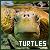 Turtles: